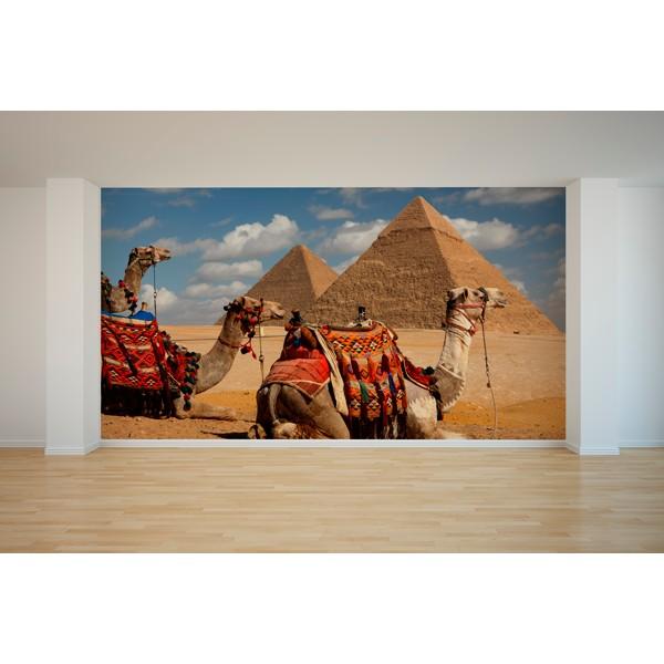 Egipto camellos