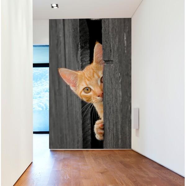 gatito asomado