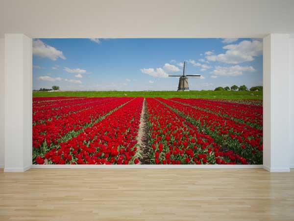 Campo tulipanes Holanda