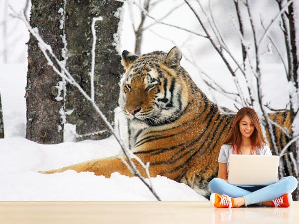 Tigre en la nieve